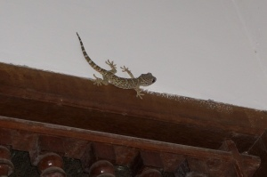 Gecko hanging out over our kitchen door