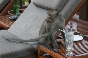 Monkey finishing off our drinks