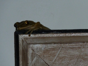 Frog on a picture in the dining room
